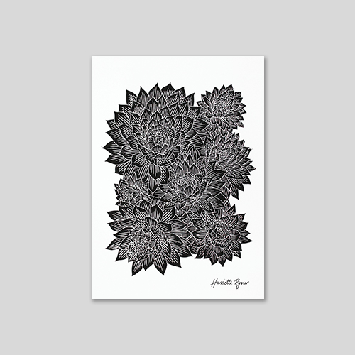 echeveria succulent black and white lino cut print